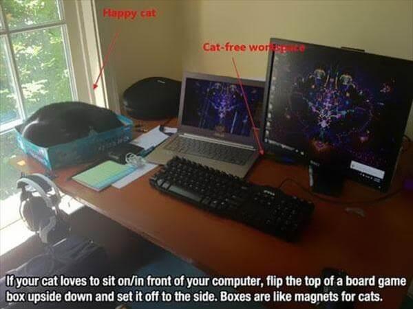 diy cat free work space idea