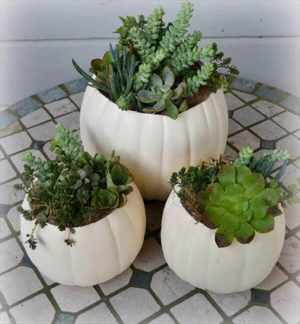 diy pumpkin succulent garden idea